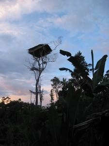Papua-Korowai– tree people tribe