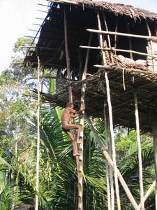 Papua-Korwai-tree people tribe